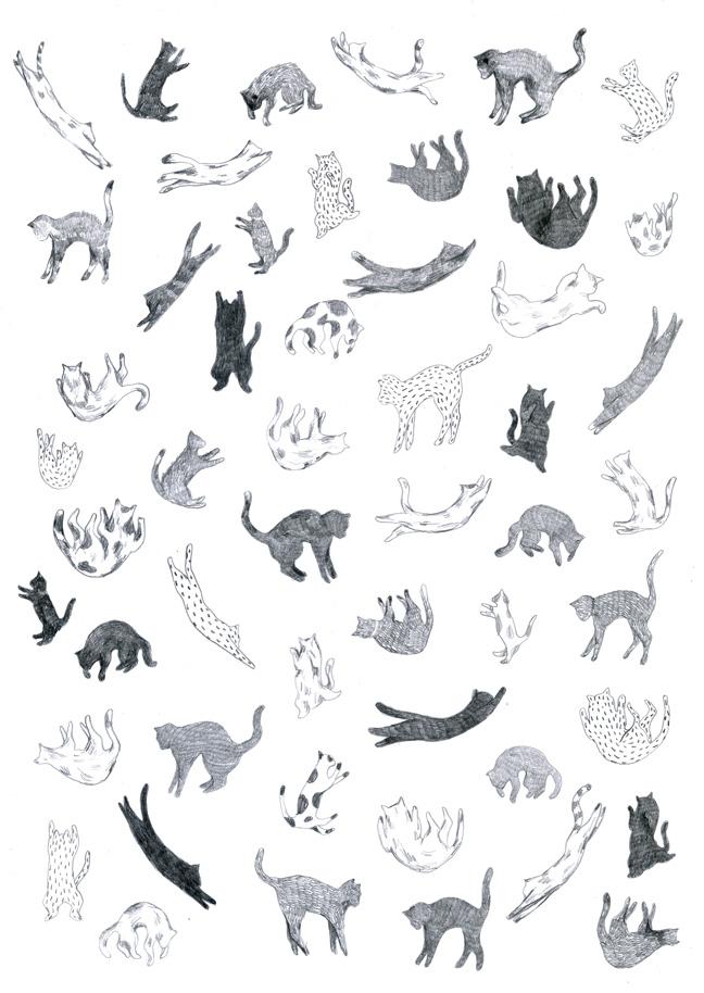 yasmine gateau, illustration, chute de chats, cats fall